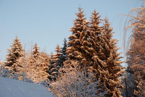wintermorgen-baumwipfel-happenmuehle-urlaub-bodensee